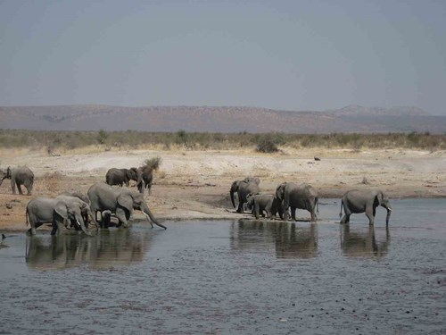 Tau Luxury Game Viewing Lounge Elephants Waterhole
